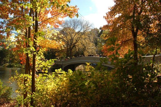 Central Park VI