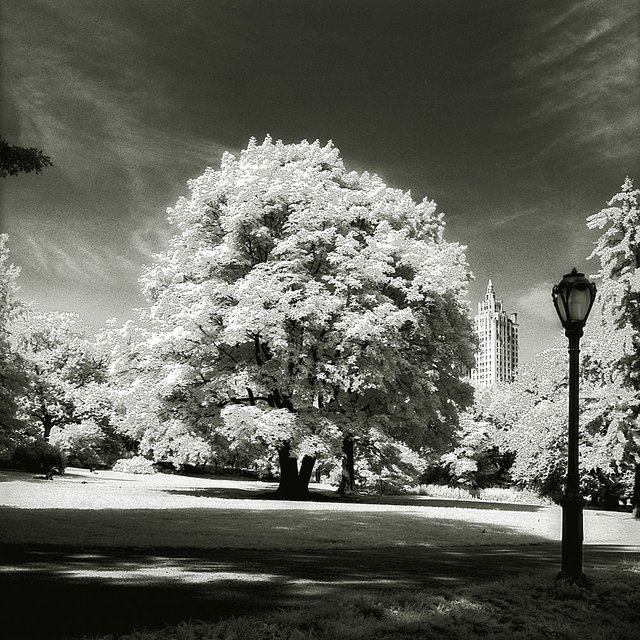 Central Park tree classic photography by Ralf Uicker