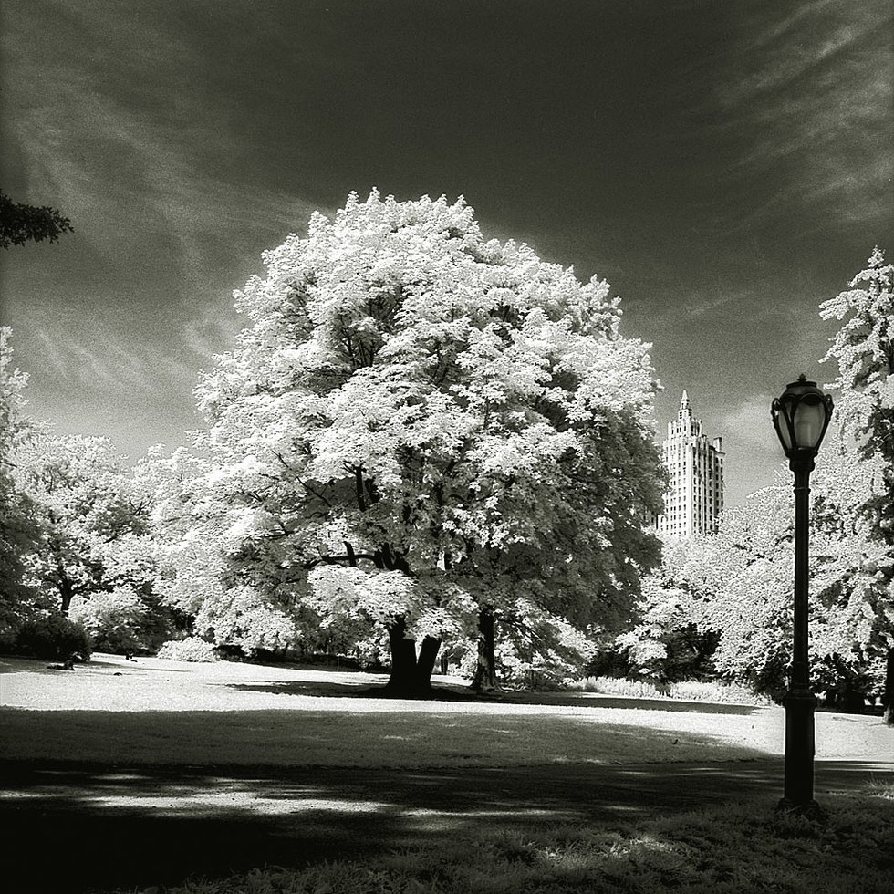 photo entry  central park tree classic photography by ralf uicker