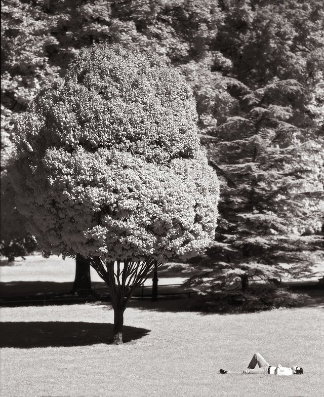 3New York Central Park014.jpg