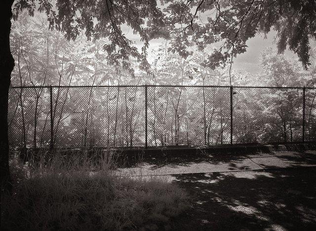 13New York Central Park053.jpg