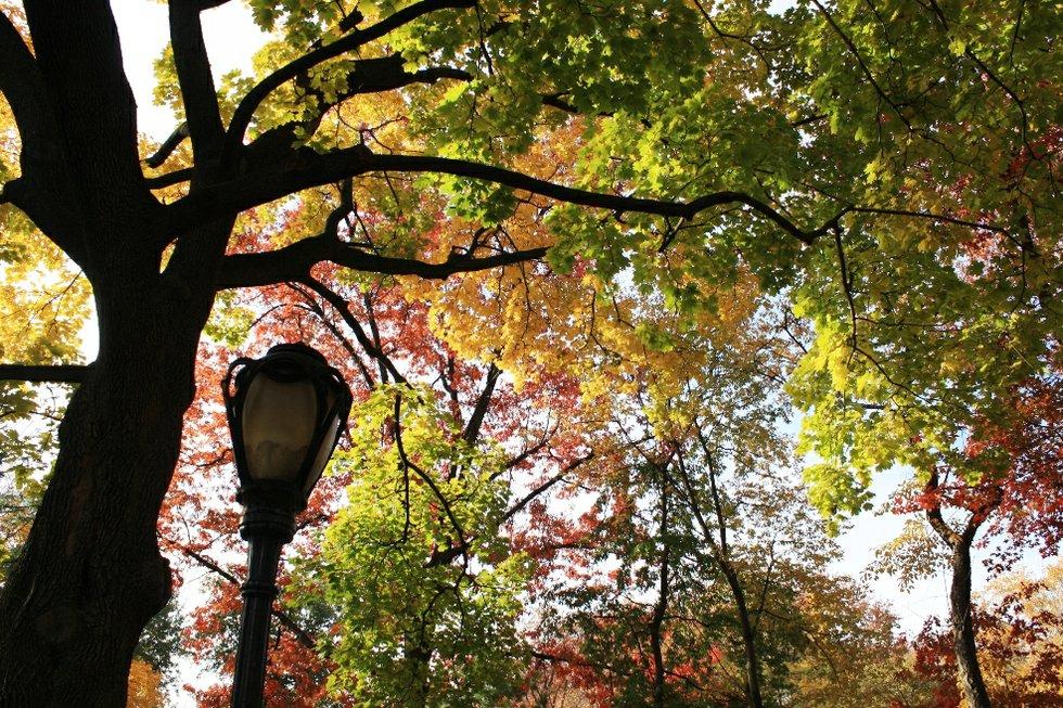 Fall Canopy