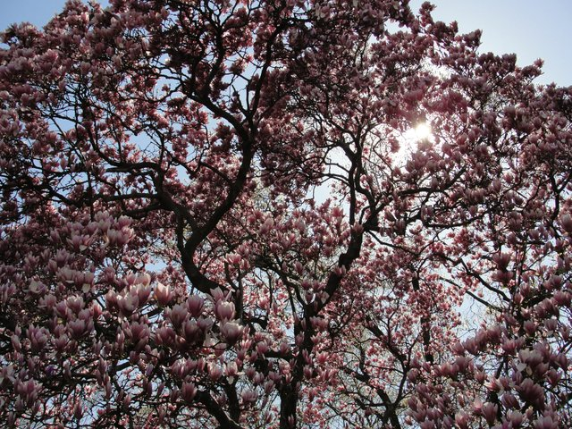 Beauty of a Tree