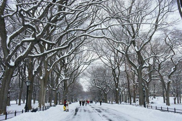 A Winter's Day in Central Park