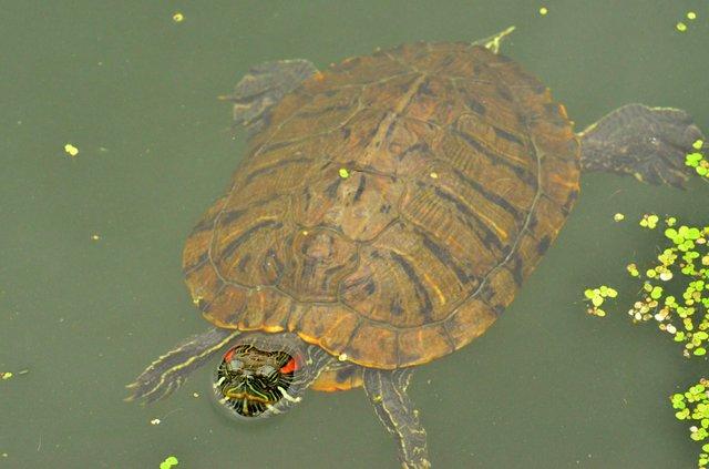 Turtles Rock...well, they swim, but still