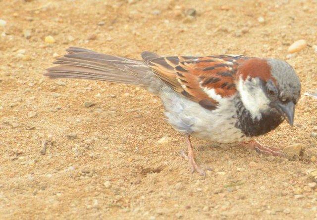 please dont fly away little birdie!!