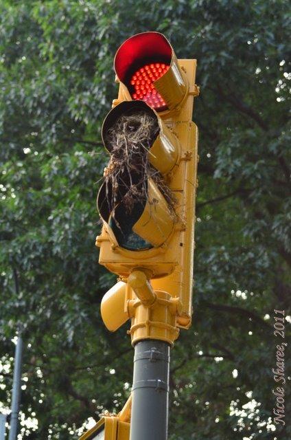 """waitng"" to nest"