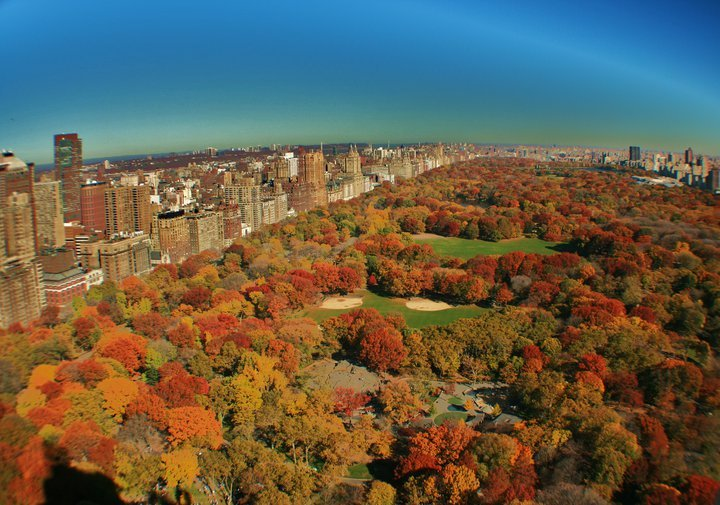 Photo Entry Autumn In Central Park