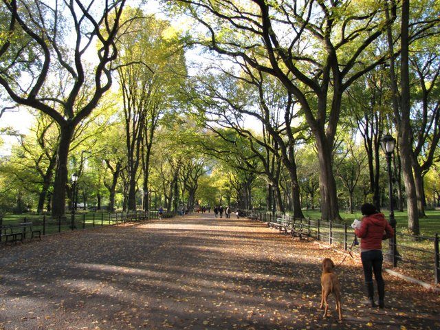 your complete guide to new york city s central park