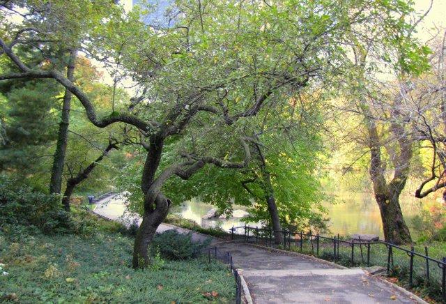 Southe Central Park