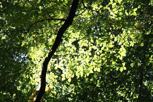Light in tree leaves