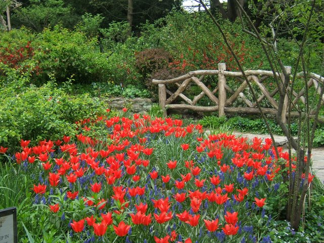 shakespeare-garden.jpe