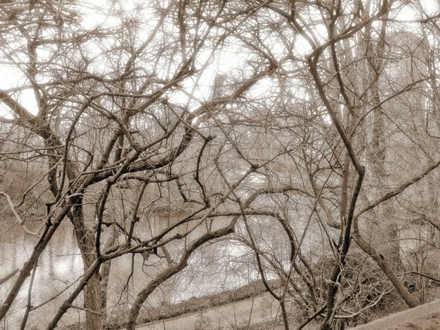 Tangle of  Branches