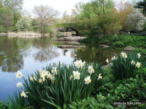 Daffs by the pond