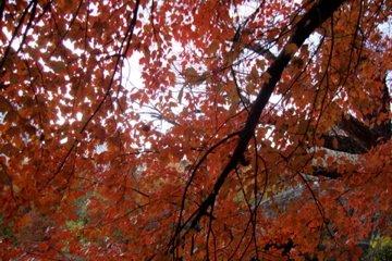 Central Park's beautiful autum leaves!