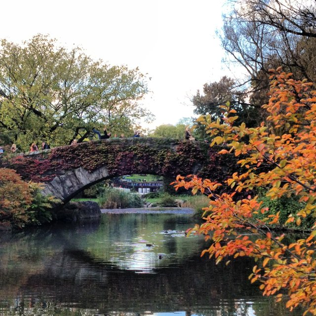 Bridge over the Duck Pond