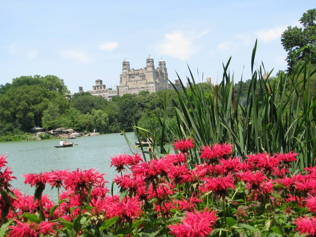 Blissful Central Park Summer Day