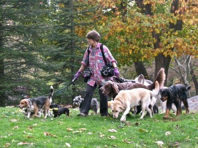 dog walker extraordinaire