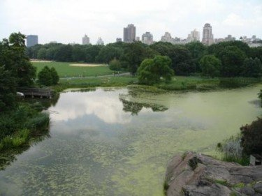 View from the Belvedere castle