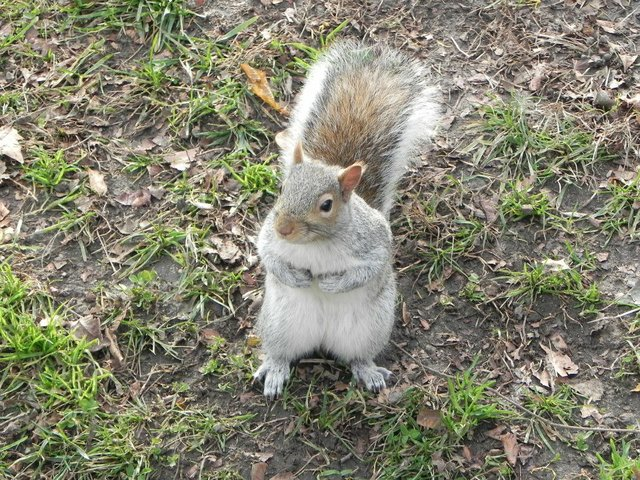Love the squirrels of Central Park!