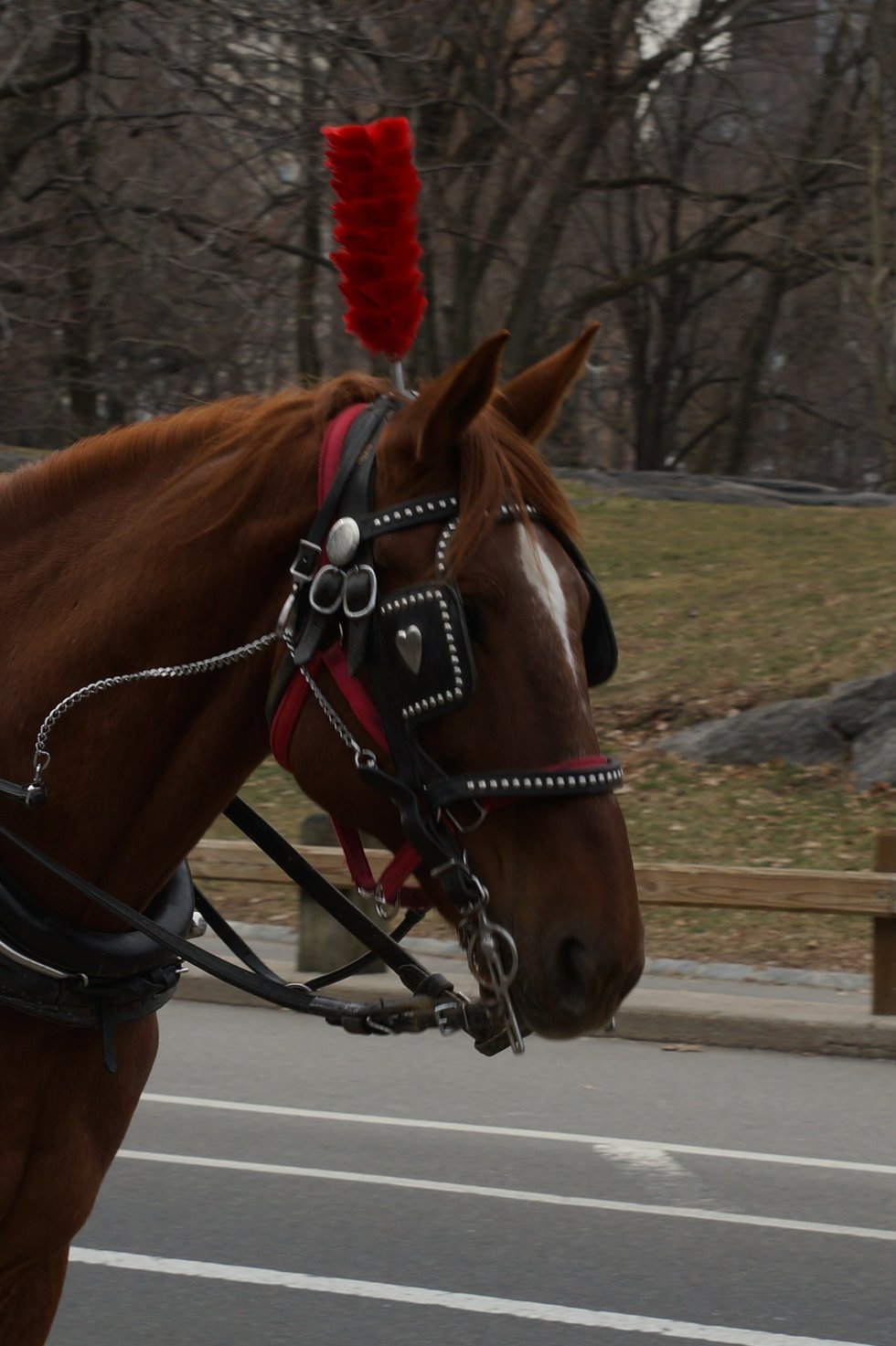 Another wonderful ride in Central Park-Closeup