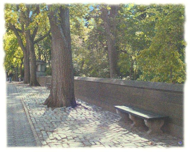 Central Park 5