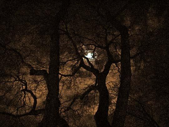 Moon between the trees