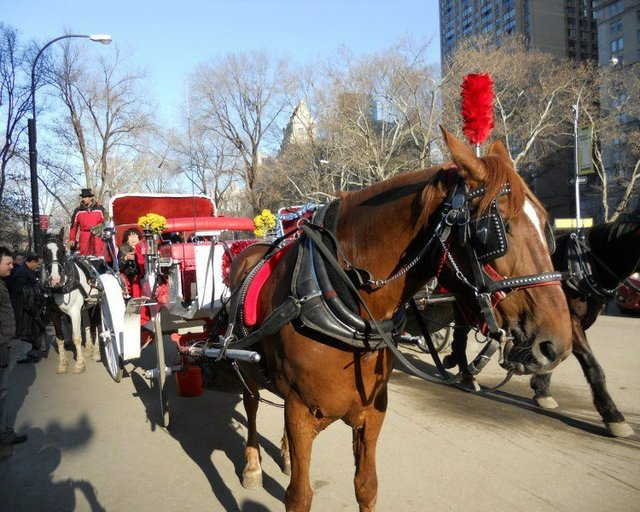 Beautiful day for a carriage ride!