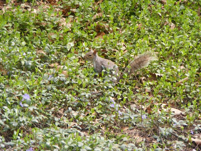 Camouflage Squirrel