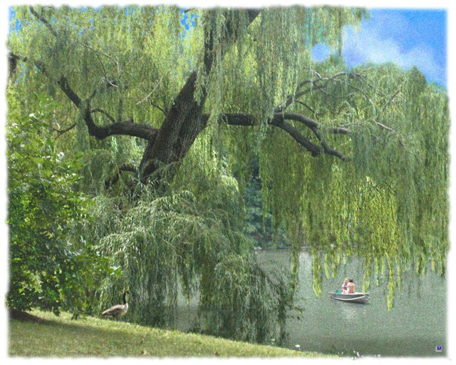 Central Park Weeping Willow & Friends