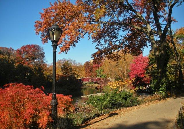 November in the Park