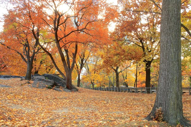 Central Park in Fall 2013
