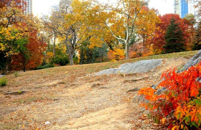 Fall at Central Park