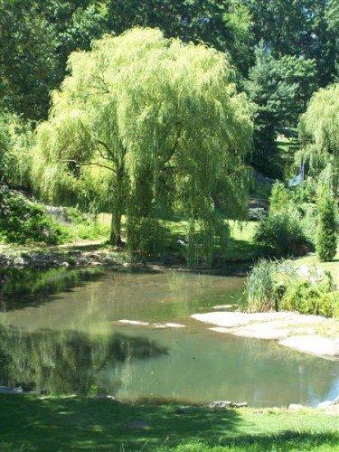 Amazing tree at the Pond
