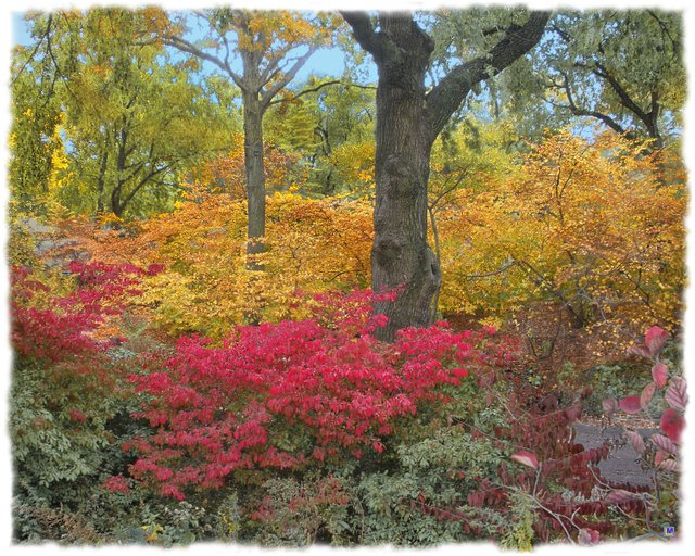 Central Park in Autumn 6