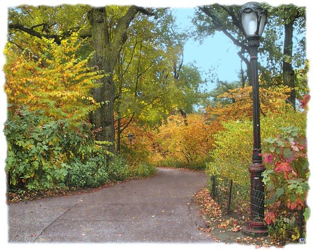 Central Park in Autumn 7