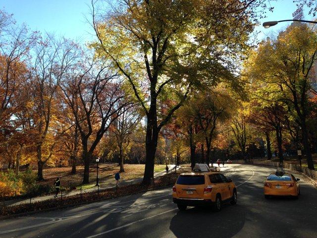 Central Park November 2013