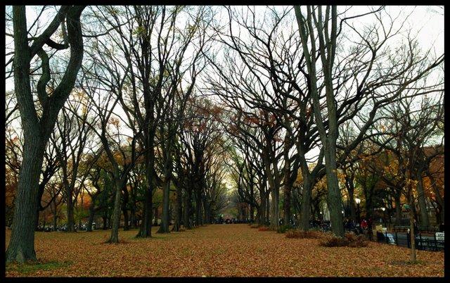 Fallen Fall Leaves