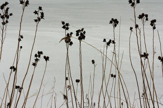 Frozen Turtle Pond