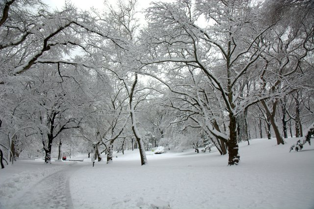 Snowfall in Central Park