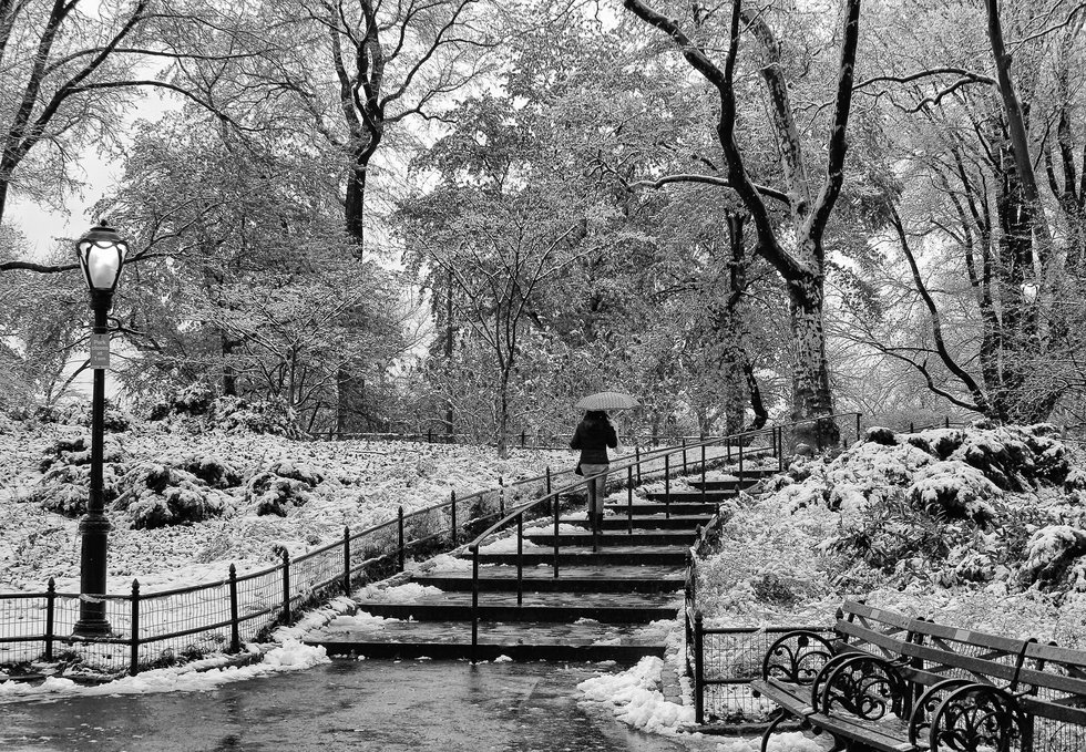 photo entry  winter in central park