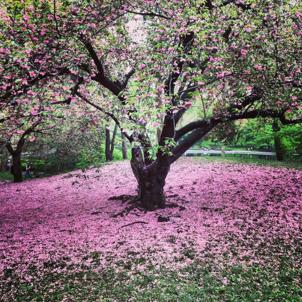 Last of spring