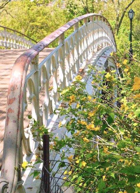 Bridges Blooming