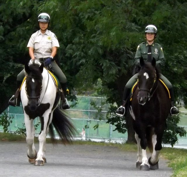 Park Rangers and Their Beautiful Horses
