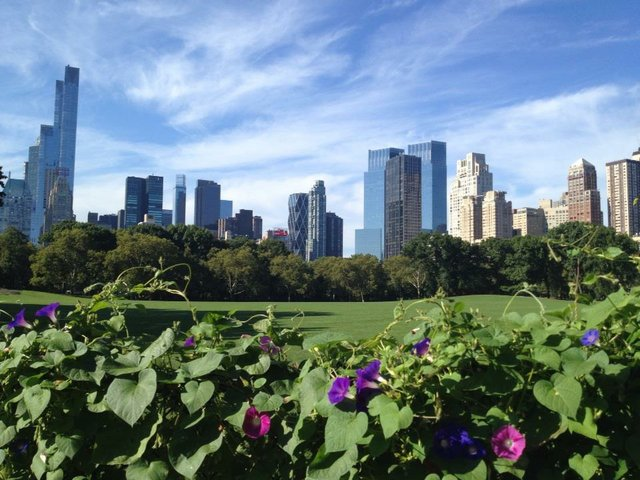 Sheep Meadow Skyline View from Nell Singer Lilac Walk