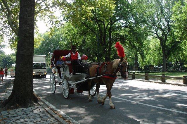 horsey in red