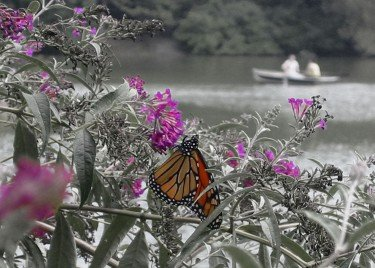 Butterfly on Flower by Lake