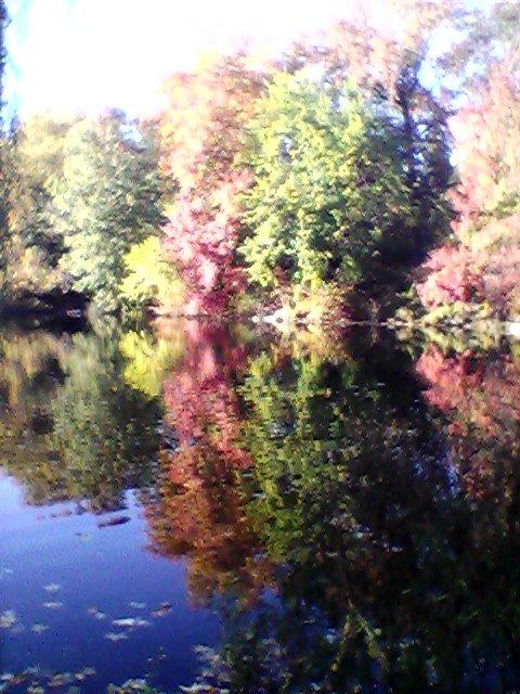 The Pool Autumn 2015