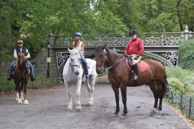 Horseback riding, on the Bridle Path in Central Park