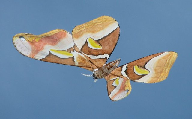 Giant butterfly-shaped kite
